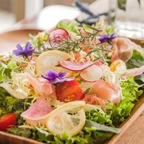 フレッシュな前菜のサラダ。
