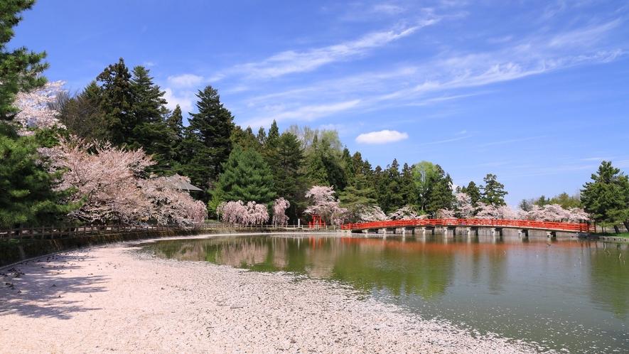 桜の花びらで埋め尽くされます