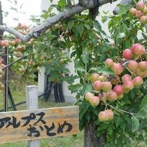 当館自慢のりんご園