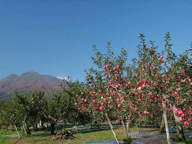 岩木山と収穫直前のりんご