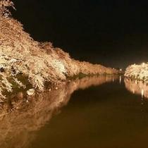【弘前さくら祭り】弘前公園園内、夜の並木道です。