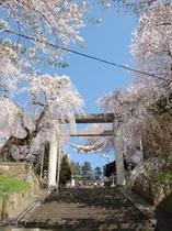 【南陽市・観光情報】日本一の石造りの鳥居と桜(当館から徒歩5分)