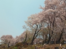【南陽市・観光情報】烏帽子山(春)(当館より徒歩5分)