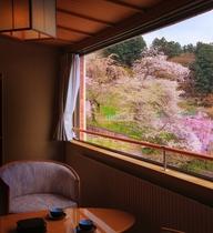 【東館特別室「山吹」からの桜】四季折々の眺めも魅力