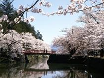 【米沢市・観光情報】松が岬公園の桜(車で30分程)米沢城址本丸の濠沿いにあり濠の水面に映る桜が見事