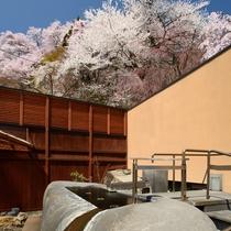 【東湯・露天風呂】桜も絶景!一段高い「原石風呂」で花見の湯あみを