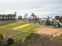 車で10分。井田村の「菜の花畑」