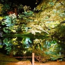 【周辺情報】夜の高台寺ライトアップ☆