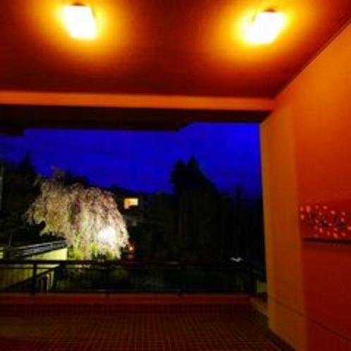 さくら亭の夜桜 1