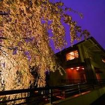 さくら亭夜桜3
