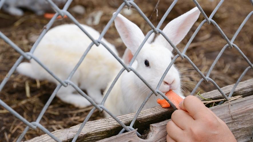 *【ウサギ小屋】エサをあげたりふれあうこともできるのでお子様も大満足!
