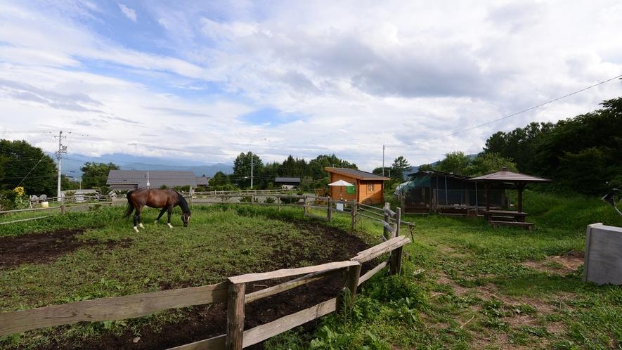 *【馬】雄大な自然の中で暮らす動物のいる、非日常的な体験をお楽しみください。