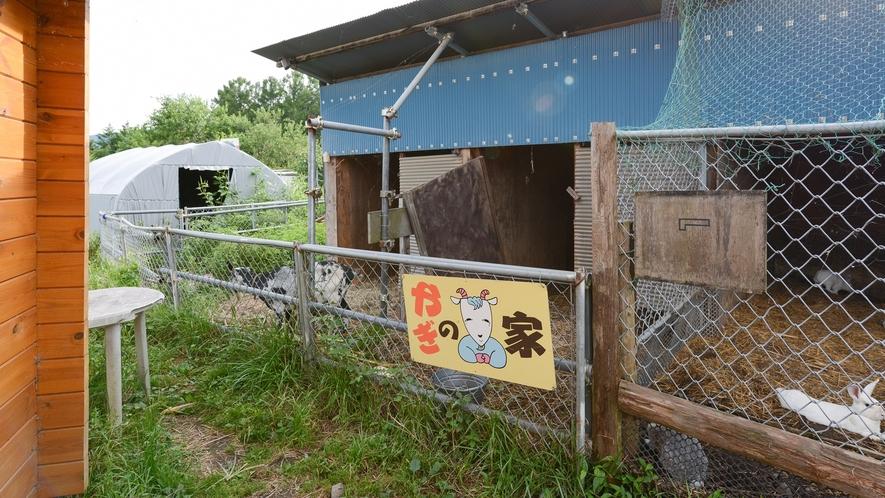*【ヤギの家】当館にはヤギの家もあります。目印はこの看板です。