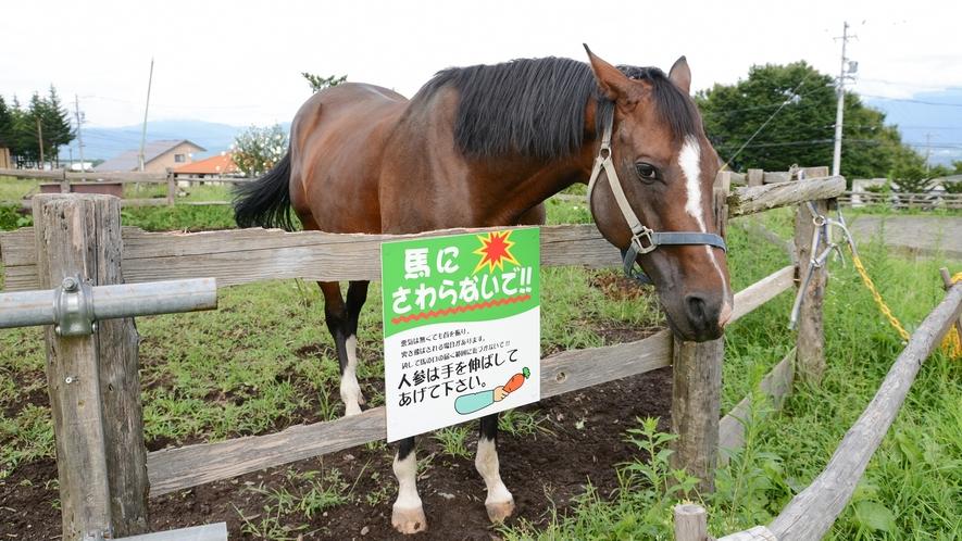 *【馬】大好物のニンジンをあげるときはワクワクしますよ!