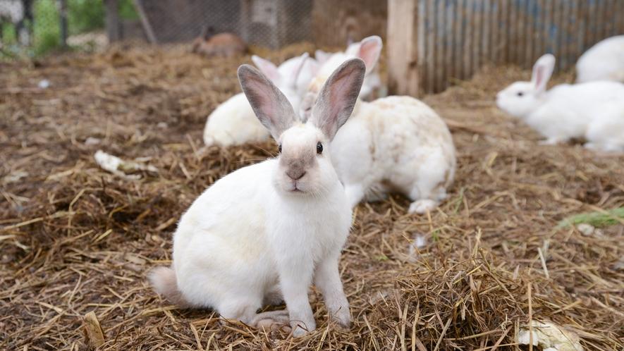 *【ウサギ小屋】たくさんのウサギたちもみなさんのお越しをお待ちしております。