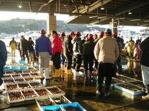 地元の豊浜市場では『魚半』の屋号でセリに加わる