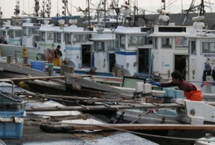 豊浜の漁船群 - 伊勢湾から三河湾、渥美外海辺りまでを漁場とする