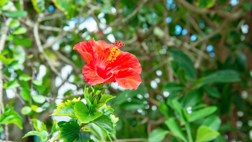 *沖縄で楽しい時間をお過ごし下さい★
