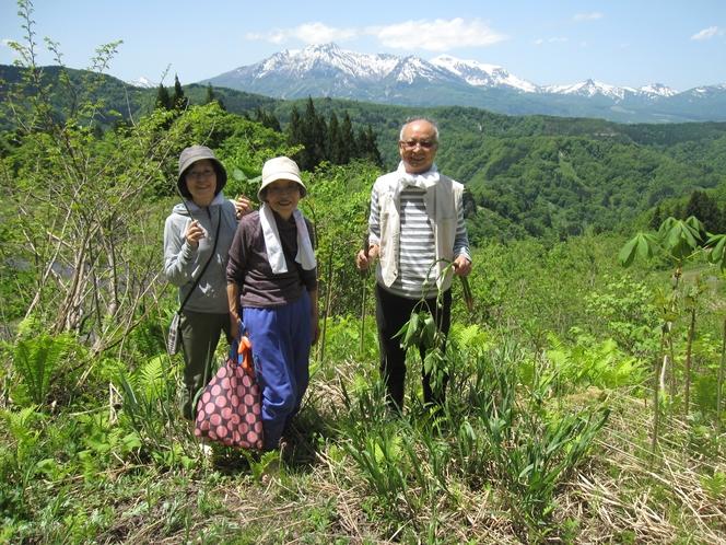 山菜狩り収穫