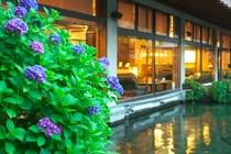 当館中庭と紫陽花です