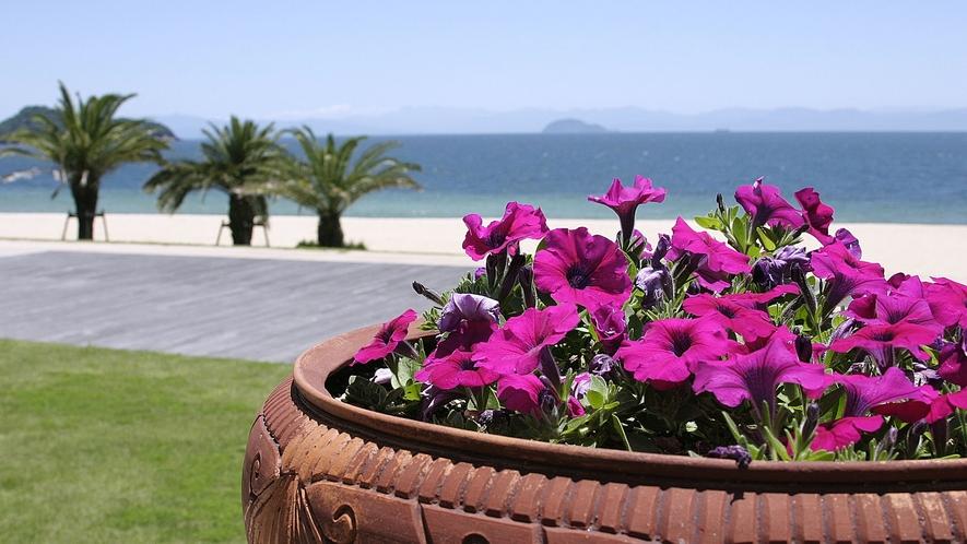◆ペチュニアとビーチ