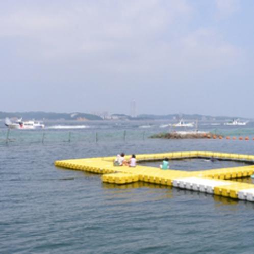 *サンセットビーチでイルカと触れ合い、癒しの休日を!(開催期間:5/14〜9/23)