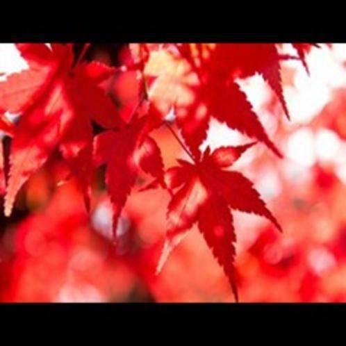 秋★淡路に紅葉狩り★