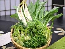 蔵王の春山菜