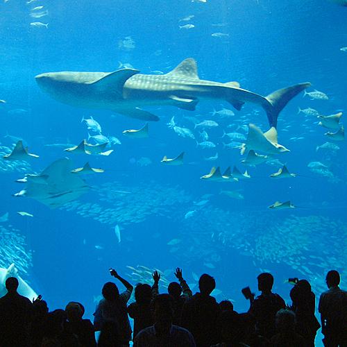 ◇美ら海水族館
