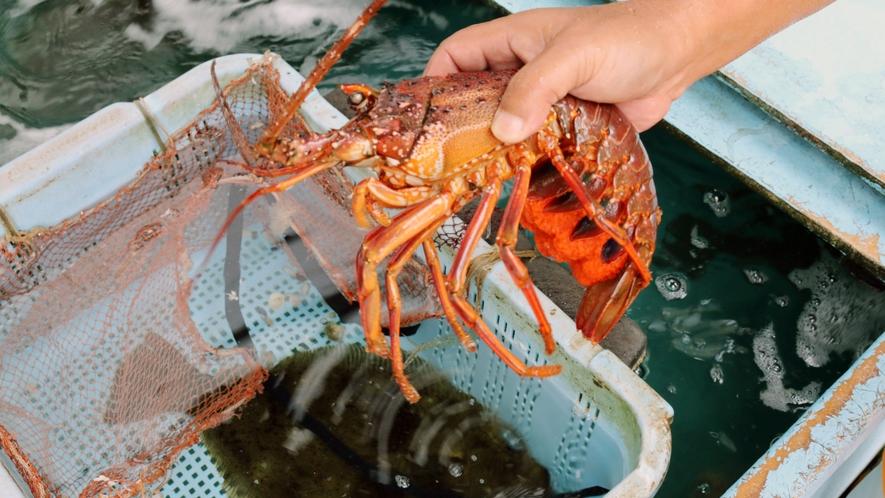 ◆食材は全て天然物!新鮮な旬の海の幸をご堪能ください!