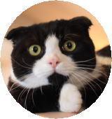 看板猫 とと 4