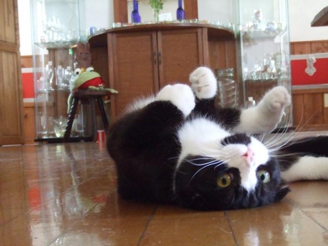 看板猫 とと 2