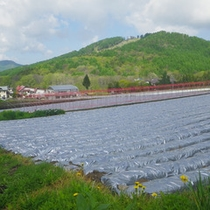 *【周辺/グリーン期】当館近くの畑で高原野菜を育てています。