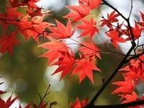 【周辺】「奥津渓谷」や「県立森林公園」など紅葉名所がたくさん