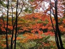 県立 森林公園