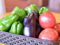 ゆもとや農園で採れた野菜