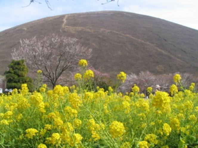 菜の花と大室山