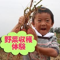 野菜を収穫