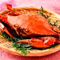 三河湾産の渡り蟹は隠れた絶品食材です