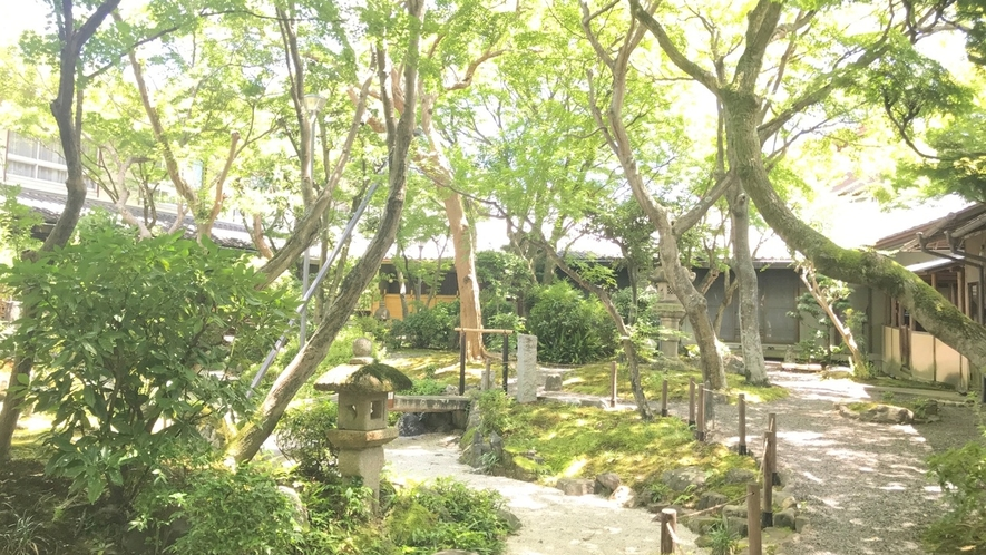 中庭園(夏)