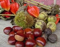 実りの秋、栗、胡桃