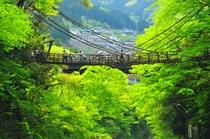 秘境「祖谷」のかずら橋。国指定重要有形民俗文化財