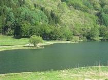夏の中綱湖1