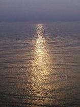 秋海(イメージ)
