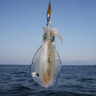 【隠れ若狭グルメ付】プチ海鮮料理にアオリイカ300g!お刺身でど〜ん!期間限定★