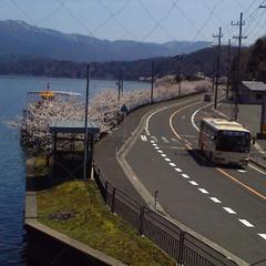 【デイユース】水月湖 × 桜 × ライトアップ★2019春登場!7日間だけの夜桜カヤック