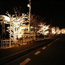 夜桜カヤック
