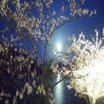 ライトアップの桜