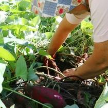 *野菜は自家栽培