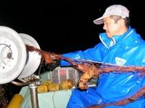伊勢えび網漁